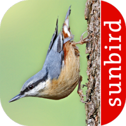 Bird Id - British Birds